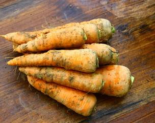 grosses carottes bio,,récolte du jardin sur bois