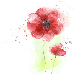 Poppy flowers illustration.Watercolor illustration