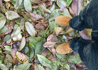 Legs leaves