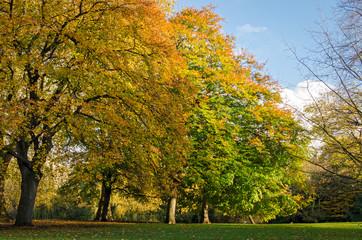 London, St. James Park (autumn)
