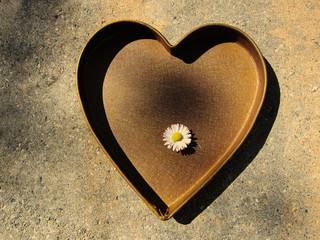 Herz mit Gänseblümchen 2, sepia