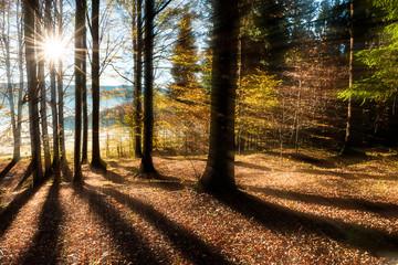 bosco del cansiglio 0047