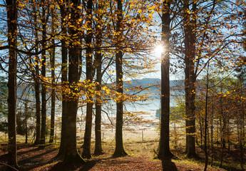bosco del cansiglio 0058