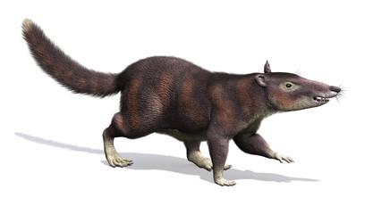 Cronopio - Prehistoric Mammal