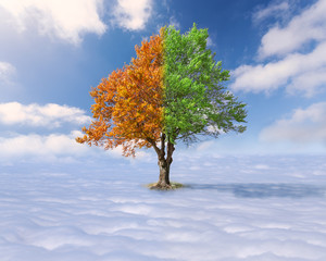 Single tree with green and red leaves above the clouds