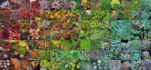 Plantes de rocailles 2015
