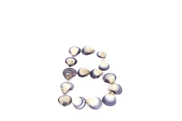 sea shell letter B on white background