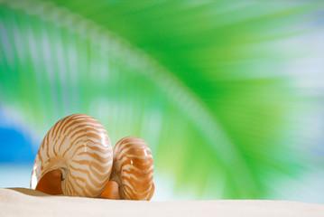 nautilus shell  with palm leaf , beach and seascape, shallow dof