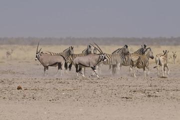 Wildlife am Sonderkop-Wasserloch, Etoscha, Namibia, Afrika