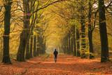 Fototapety Man walking in a lane of trre's on an autumn day.