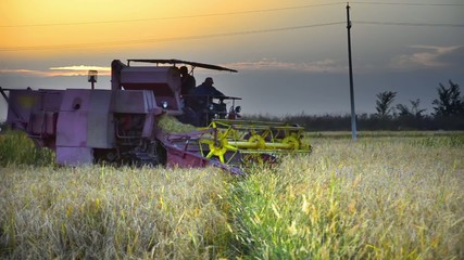 Combine harvesting at sunset in autumn