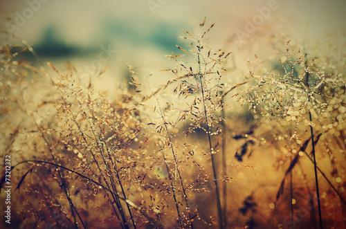 Morning beauty - 73212372