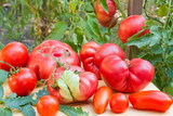 Inglorious tomatoes