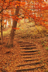 Footpath autumn forest