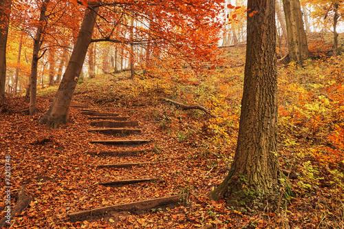 mata magnetyczna Ścieżka las jesienią