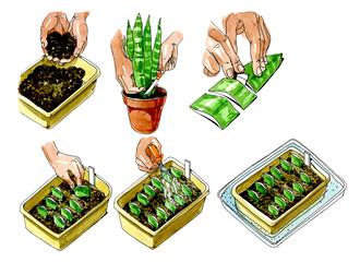 Preparation of sheet for planting. Botany.