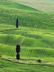 Typical Tuscany lanscape in spring
