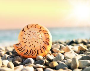 морская раковина на берегу моря