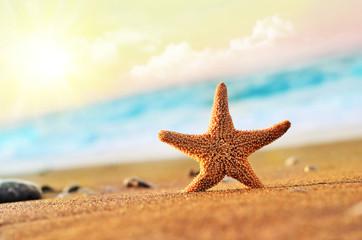 морская звезда на берегу моря