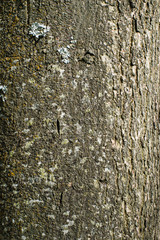 Tree bark texture or background
