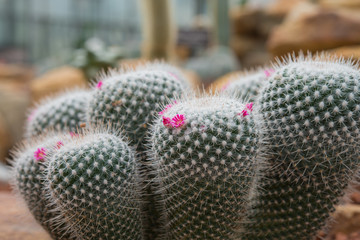 Beautiful cactus plant