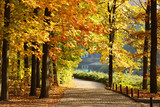 Beautiful park - 73221705