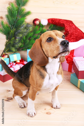 canvas print picture Beagle dog with Christmas gifts on wooden background