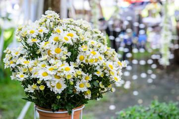 Bunch of white flower