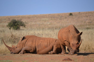 Rhinoland