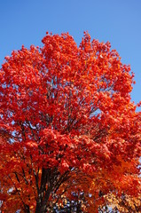 帯広の紅葉
