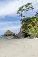 Sandy beach with overhanging trees