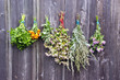 various medical herbs bunches on old wooden wall