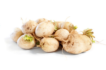 Turnips on white