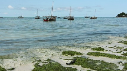 Dhows anchored in clear coastal waters of Zanzibar