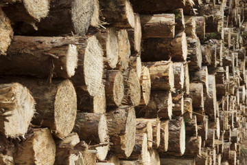 Holzstapel mit kleinen Stämmen