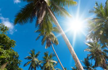 Palms under the Sun Plants Foliage