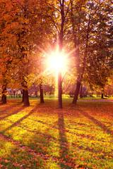 Sunlit Foliage Natural Background