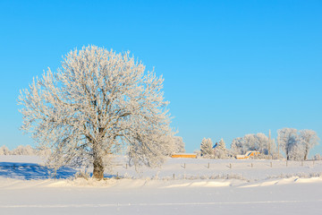 Frosty tree in winter landscape