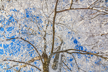 Frost covered branche