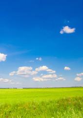 Scene Grass Landscape
