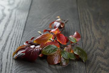 autumn bush leaves on old oak table