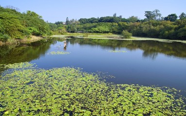 The wetland swamp near city in southern Taiwan
