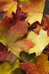 autumn maple leaves on old oak table