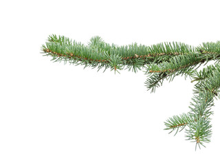 green fir branch for christmas