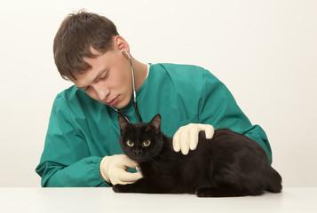 Veterinarian surgeon doctor and cat
