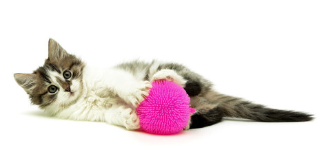 Little fluffy kitten with toy lying on a white background
