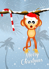 monkey at Christmas