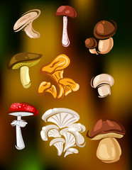 Colorful set of vector mushrooms and fungi