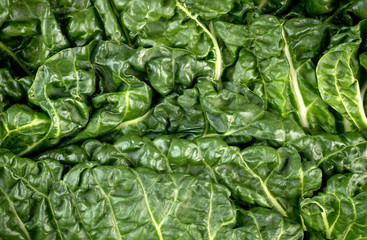 Macro closeup of healthy green fresh silverbeet