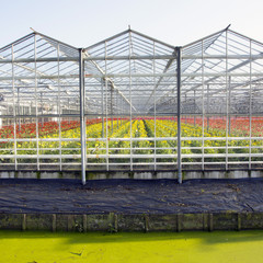 greenhouse full of blossoming flowers in the netherlands